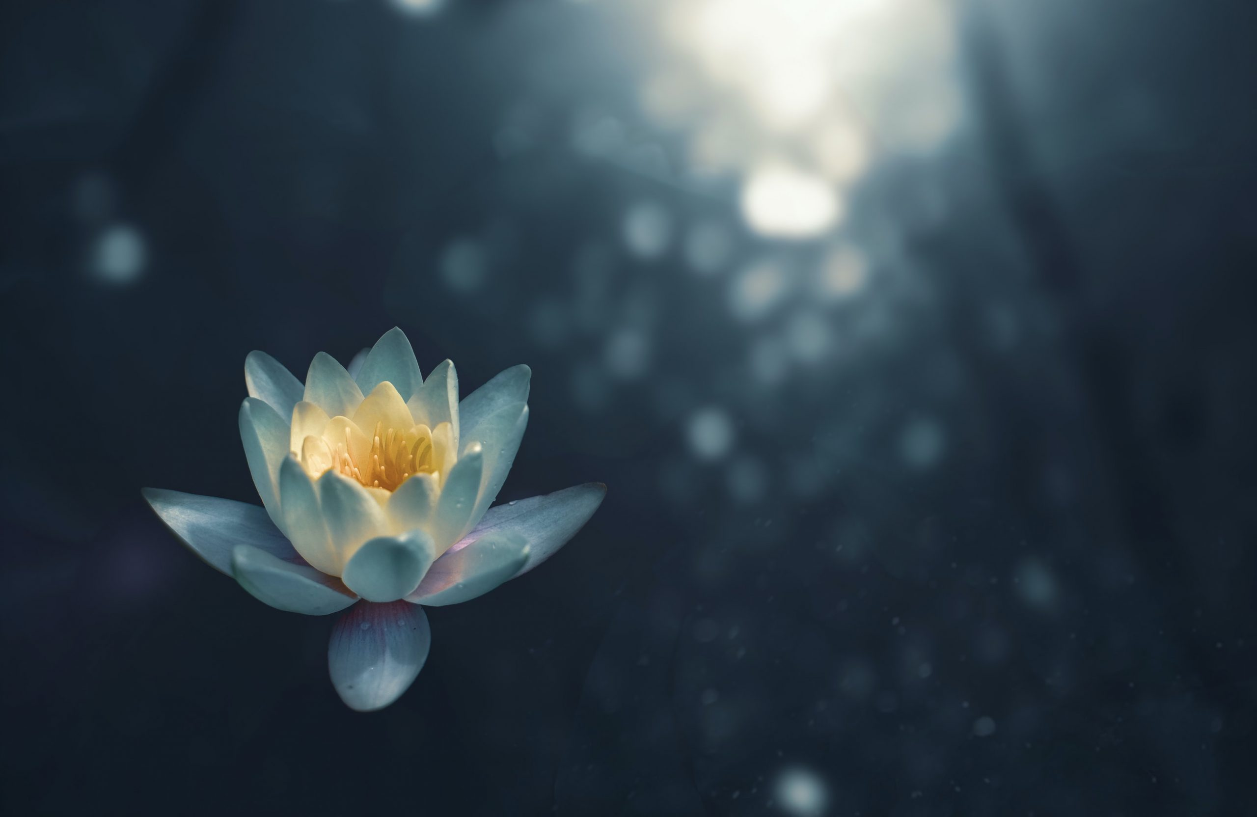 lotus-flower-relaxation-of-the-mind